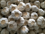 Neues Crop Normal White Garlic 800g/8kg Carton