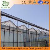 Serre chaude en verre agricole de toit de Venlo pour des légumes et des fleurs