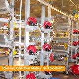 Cage neuve de poulet de poulette de modèle et de prix bas sur le marché de l'Afrique