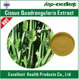Estratto di Teng dell'estratto di Cissus Quadrangularis/gong dei leu