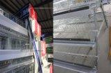 Matériel de ferme avicole de treillis métallique pour le poulet de couche
