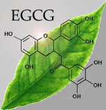 Groene Thee EGCG met Polyphenol 20%-98%, Catechins 30%-90, EGCG20%98%