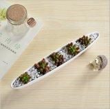 Mini Flowerpot bianco a forma di reso personale della barca verde oliva di ceramica