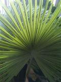 人工的なヤシの木