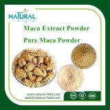 100% natürliches Pflanzenauszug Maca Auszug Maca Puder-4:1