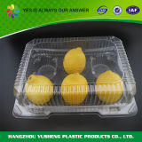 Blasen-Frucht, die Wegwerfbehälter packt