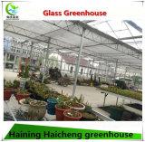 Дом Multi пяди коммерчески Hydroponic стеклянная зеленая для поленики
