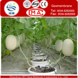 Witte Transparent HDPE Membrane voor Greenhouses van Vegetable of Fruit