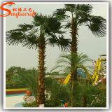 Paysage extérieure en fibre de verre artificielle Palm Tree