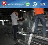 Silberner Stern-automatisches Schicht-Huhn-Rahmen-System