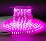 Striscia impermeabile flessibile del fornitore 110V 220V SMD5050 50m/Roll RGB LED della Cina LED