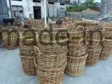 مخروط يشكّل طحلب حديقة مزارع مجموعة من 3