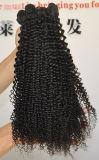Estensione brasiliana Lbh 117 dei capelli umani del Virgin riccio crespo naturale di 100%