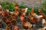 Sailin galvanisierte das Huhn-Draht-Fechten