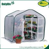Schioccare in su la serra libera della pianta per la protezione fredda di gelo