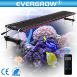 "Evergrow 32 "" 그것 240watt LED Coral Reef Aquarium Light"