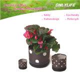 Potenciômetro de flor reusável do jardim Oh-Gf-003 Ecofriendly