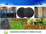 Água - poder solúvel do extrato da alga para a agricultura