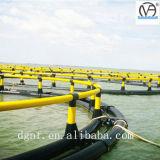 Pescados de mar profundo que flotan cultivando la jaula para la Tilapia