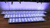 산호초는 배터 고성능 LED 수족관 빛을 증가한다