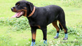 Eco-Friendly Waterproof Non-Skid PVC Printing Chaussettes pour chien en plein air