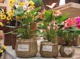 (BC-SF1001) 고품질 Handmade 자연적인 밀짚 꽃 바구니