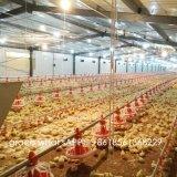 Matériel bon marché d'aviculture de qualité avec la cloche personnalisée de construction préfabriquée
