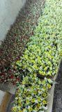 라벤더 구 Zxr418220139의 인공 꽃