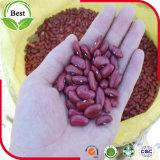 えんじ色か赤い腎臓豆