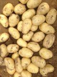 De nieuwe Aardappel van de Verpakking van het Karton van het Gewas