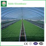 Invernadero vegetal de la película plástica de la flor del Multi-Palmo de la agricultura