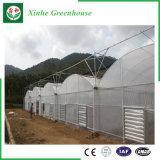 De Plastic Serre van het Frame van het Staal van de Landbouw van Qingzhou voor Groenten