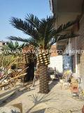 屋外の人工的なナツメヤシの木