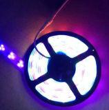 Indicatore luminoso impermeabile esterno di illuminazione LED di RGB della striscia di IP68 3528 LED