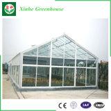 Casa verde de vidro do grande Hydroponics comercial do tamanho