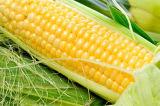 Machine de blanchiment pour le maïs