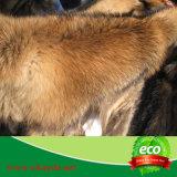 Piel de la piel del perro del mapache