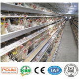 Gaiola da galinha do ovo da camada da exploração avícola da tecnologia de Poul (galvanização quente)