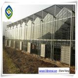 Serra di vetro idroponica commerciale per l'uva