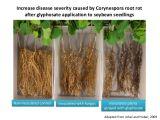 La maggior parte del Glyphosate popolare TC, diserbante 1071-83-6 di CAS