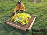 중국제 고품질 WPC 꽃 재배자