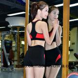 Alta calidad de secado rápido traje de deporte de las mujeres gimnasio traje de jogging