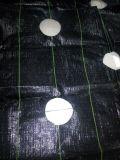 Coperchio al suolo 100% del polipropilene/stuoia del Weed/stuoia a terra