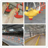 Pollame Feeding Equipment per Broiler Production