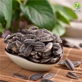 Les graines de tournesol rôties et salées les plus populaires