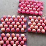 Goldenes Supplier von Fresh Red FUJI Apple