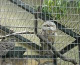 Дешево гальванизированная сваренная панель ячеистой сети