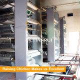 Les types automatiques de H ont galvanisé la volaille en acier de la couche Q235 élevant des cages