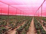 Sonnenschutz-Nettopflanzendeckel und -zaun für Aufbau