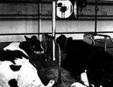 Sistemi di ventilazione dell'FS-Animale